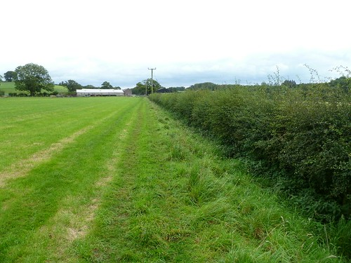 The hedge in the ditch W of Cambeckhill