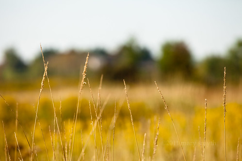 autumn ontario nature rural golden countryside bokeh farm grasses 2011