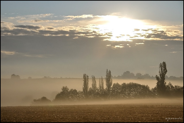 Golden morning