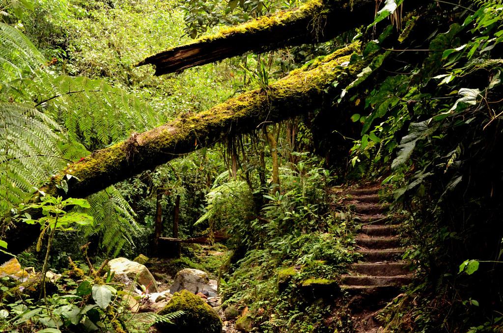 Imagen de Arboles obstruyendo el paso en el Valle de Cocora