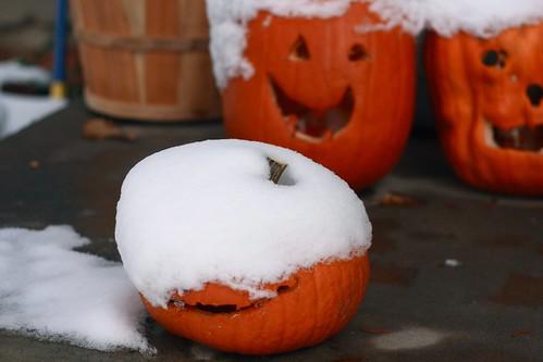 snowy pumpkins1