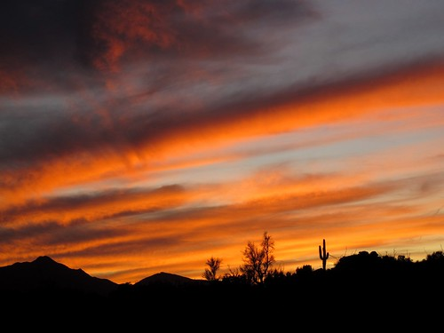 november light sunset wild arizona cactus sky mountains southwest nature clouds outdoors evening colorful shadows desert sundown silhouettes remote nophotoshop saguaro exploration discovery brilliant wildwest mohavecounty zoniedude1 canonpowershotg11 earthnaturelife poachierange