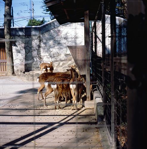 鹿(井の頭自然文化園 いのかしらしぜんぶんかえん)