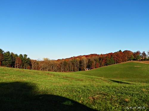autumn trees color fall georgia fallcolor hills fields greenfield gilmercounty