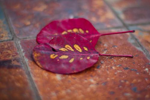 fall-0526