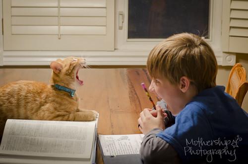 333:365家庭作业很无聊