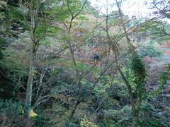高尾山20111124-083