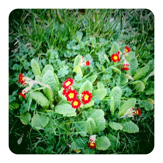 More Little Red Flowers