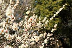 Rikugien Garden, Ameyoko