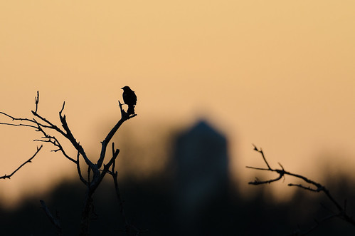 Blackbird and Watertower-1295.jpg