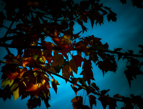 autumn light red color fall nature leaves closeup oregon portland evening twilight peace dusk digitalart serenity intimate stagesoflife