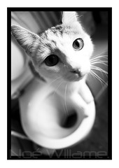 Cats like the toilet!