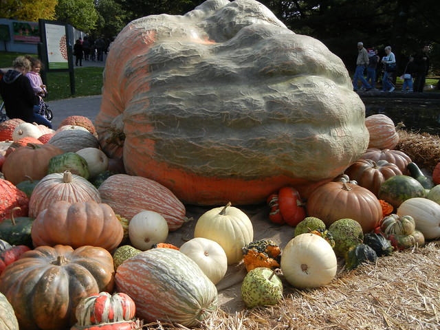 Giant Pumpkin at NYBG