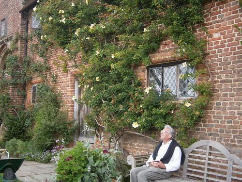 Rose in Sissinghurst