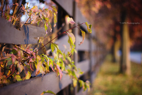 autumn fall field leaves canon fence 50mm october branch bokeh depth