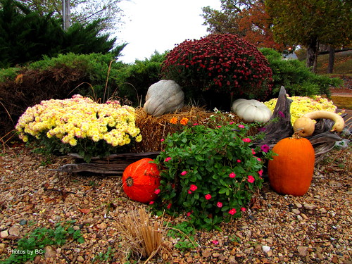 Fall Display.