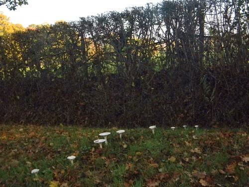 Line of fungi