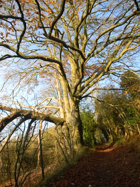 Sunlit tree and bridleway