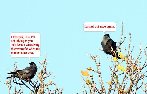 Jackdaws regret mating for life.