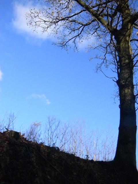Lone tree, blue sky