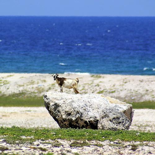 ocean blue sea beach water rock sand top deep goat aruba caribbean bocagrandi