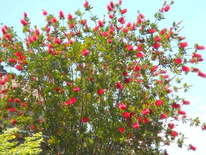 Jardineros en acci n plantas de flores rojas - Plantas de exterior con flor ...