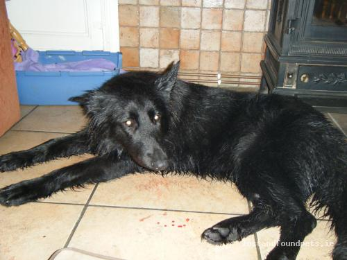 Mon, Oct 24th, 2011 Found Female Dog - Glengoole, Thurles, Tipperary