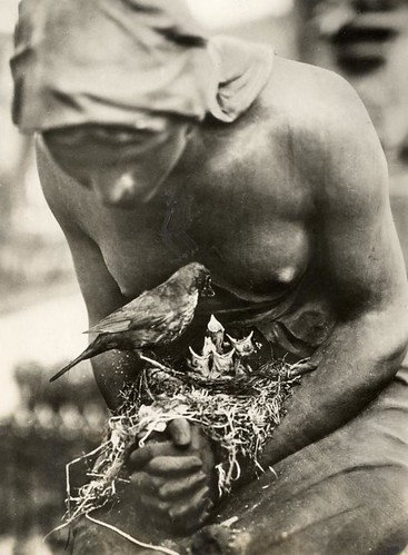 Vogelnest op grafbeeld / Blackbird's nest in the folded hands of a statue