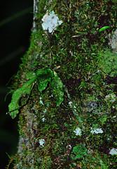 woodland(0.0), deciduous(0.0), shrub(0.0), rainforest(0.0), flower(0.0), branch(0.0), tree(0.0), ivy(0.0), jungle(0.0), autumn(0.0), leaf(1.0), sunlight(1.0), nature(1.0), flora(1.0), green(1.0), forest(1.0), natural environment(1.0), vegetation(1.0), moss(1.0),
