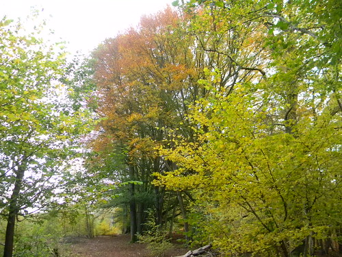 Colour in the woods