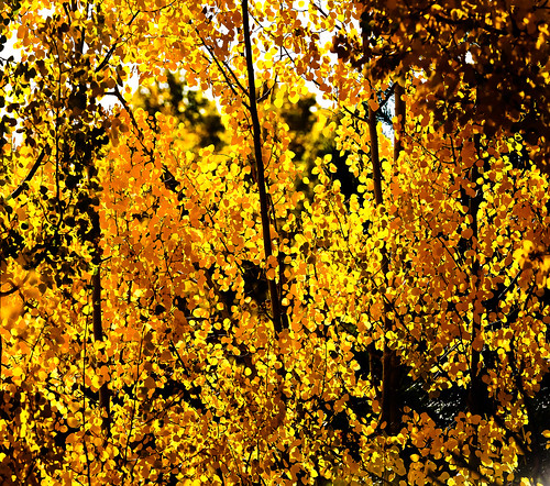 Colorado - Fall Apens