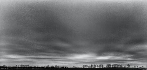 Tree Line Horizon