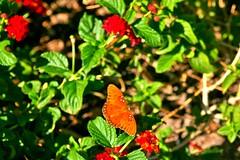 Butterfly in gardens II