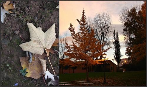 Definitivamente adoré el otoño en Aviles by Rosa Santiago Calviño