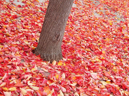 Fallen Red Leaves and a Tree Trunk