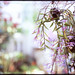 [FILM] Spring is near -4-