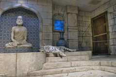 White Tiger of Maharaja's Temple