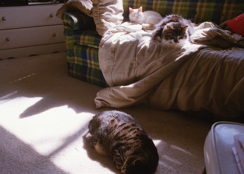 Cats in Sun IV