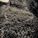 Grand Canyon du Verdon ©p.m.graham