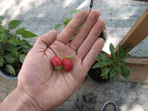 Garden 2011 Fall
