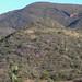 Bosque en el camino de Guadalupe de Ramirez y San José Trujano, hacia Santiago Tamazola, Oaxaca, Mexico por Lon&Queta