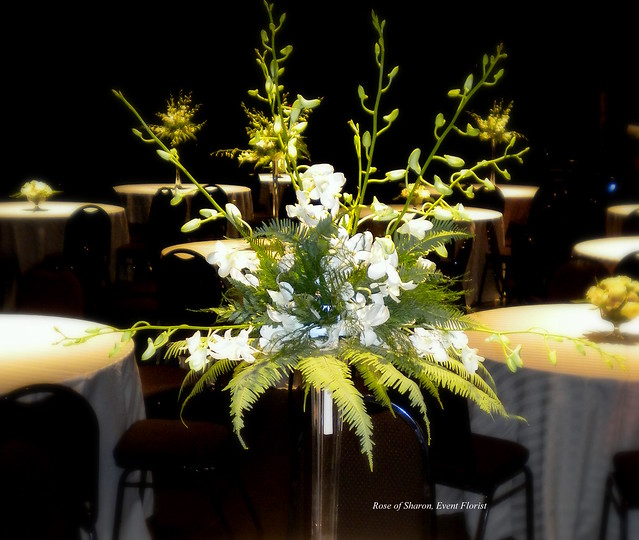Centerpiece white dendrobium orchids close up flickr