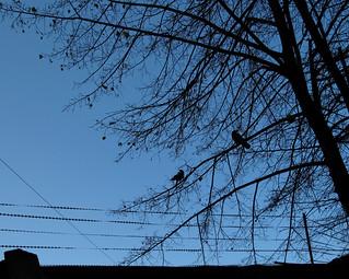 (295/365) Bared wire