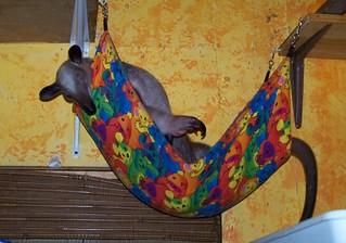Ori in the baby hammock