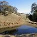 Pleasanton-Ridge-2011-10-29