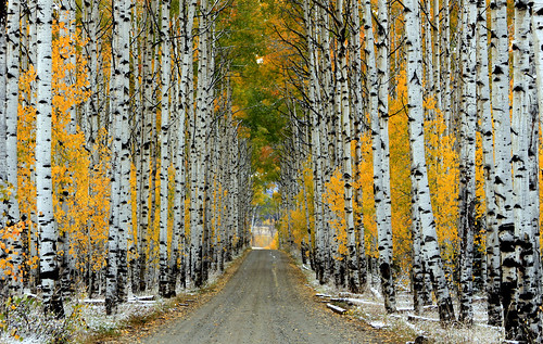trees colors landscape scenic wyoming aspen