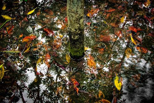 Piai Cape Mangrove Researve