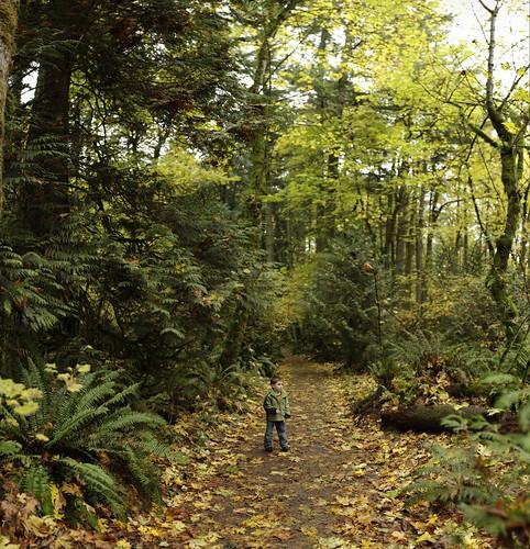 """sequoia, halfway through a sunday afternoon """"leaf walk""""    MG 1814"""