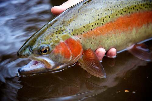 God 39 s faint path fly fishing the noontootla in n ga for Georgia fish farms