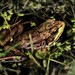 frog camouflage by -liyen-
